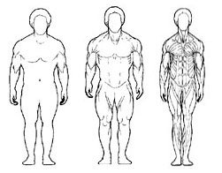 Эндоморф: тренинг и диета